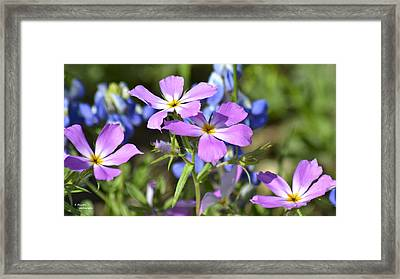 Pink Four Framed Print