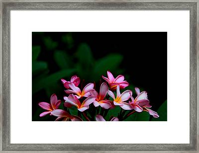 Pink Frangipani Framed Print by Donald Chen