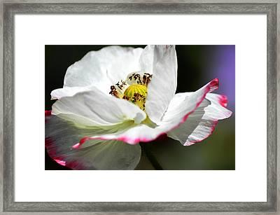 Pink Fringe Framed Print by Camille Lopez