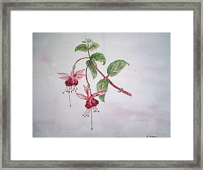 Pink Fuchsia's  Framed Print