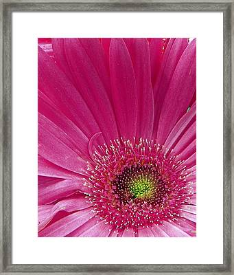 Pink Fusion Framed Print by Sheri McLeroy