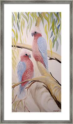Pink Gallah's Framed Print