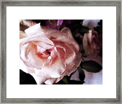 Pink Garden Rose With Secret Heart Framed Print by Julie Magers Soulen