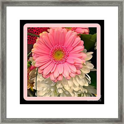 Pink Gerber Daisy Framed Print