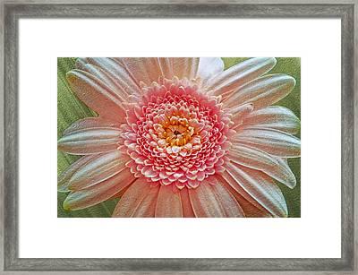 Pink Gerbera Textured Framed Print