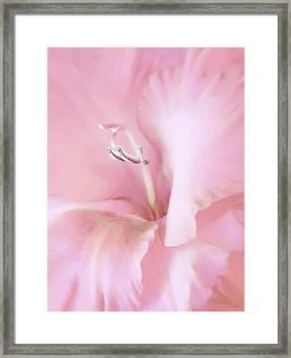 Pink Gladiolus Flower Framed Print by Jennie Marie Schell