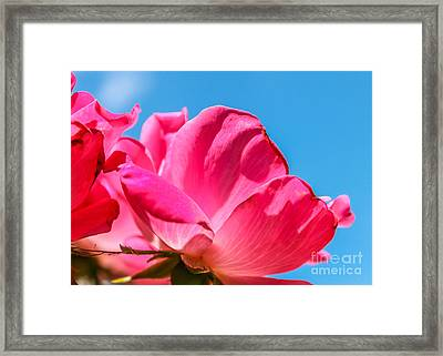 Pink Glory Framed Print by Brandon Hussey