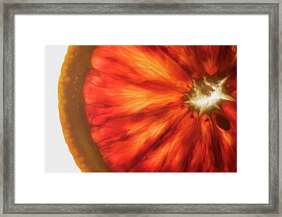 Pink Grapefruit, Back-lit Framed Print