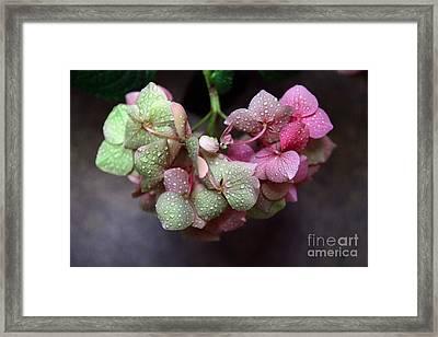 Pink Green And Rain Framed Print