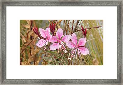 Framed Print featuring the photograph Pink Guara by Bonnie Muir