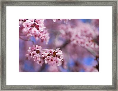 Pink Framed Print by Guido Montanes Castillo