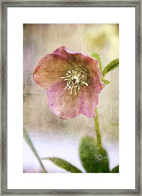Framed Print featuring the photograph Pink Hellebore by Betty Denise