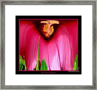 Pink Hibiscus Abstract Framed Print by Rose Santuci-Sofranko