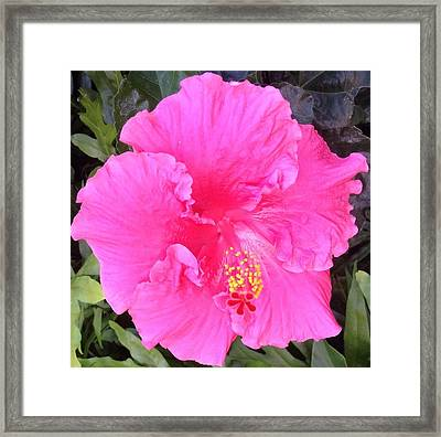 Framed Print featuring the photograph Pink Hibiscus by Alohi Fujimoto