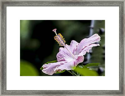 Pink Hibiscus Flower Framed Print by Photographic Art by Russel Ray Photos