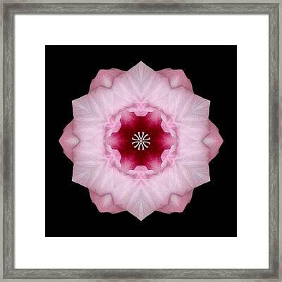 Pink Hibiscus I Flower Mandala Framed Print