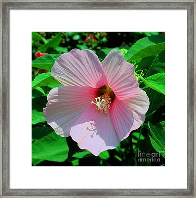 Pink Hibiscus Framed Print by Luther Fine Art