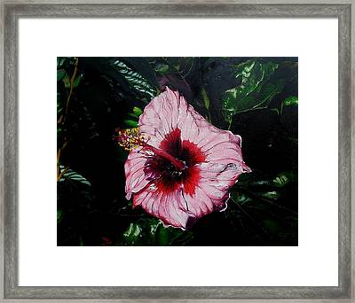 Pink Hibiscus Framed Print by Raymond Perez