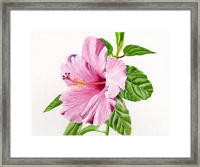 Pink Hibiscus With White Background Framed Print by Sharon Freeman
