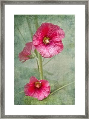 Pink Hollyhocks Framed Print