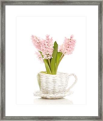 Pink Hyacinths Framed Print by Amanda Elwell