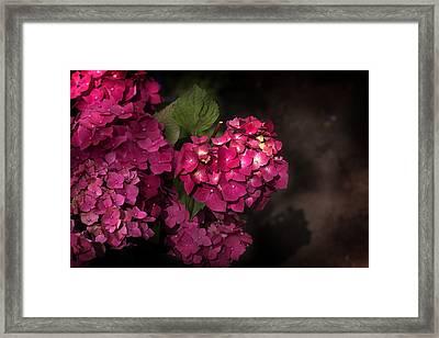 Pink Hydrangea Flowers In A Garden Framed Print
