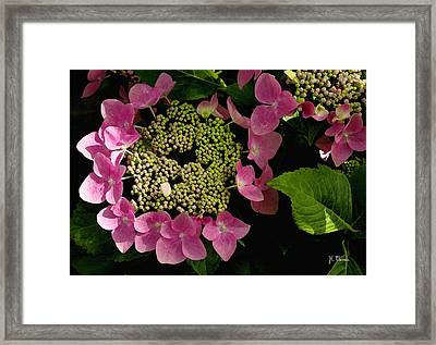 Framed Print featuring the photograph Pink Hydrangea by James C Thomas