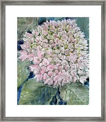 Pink Hydrangea Framed Print by Louise Peardon