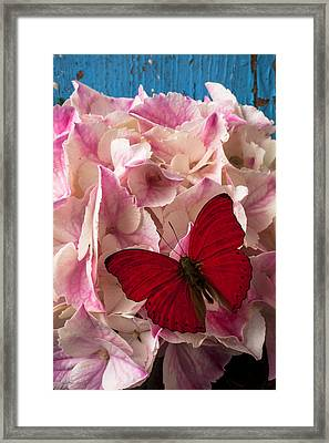 Pink Hydrangea With Red Butterfly Framed Print by Garry Gay