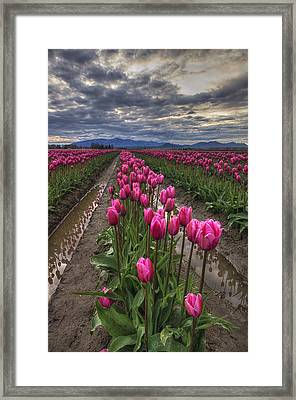 Pink Impression Framed Print by Mark Kiver