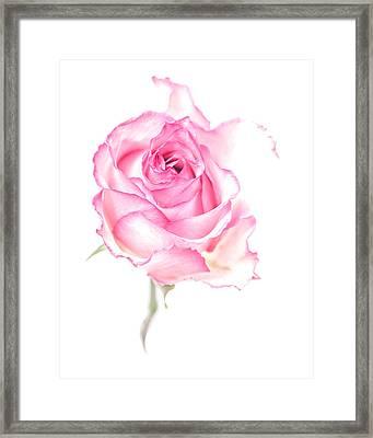 Pink Impression Framed Print
