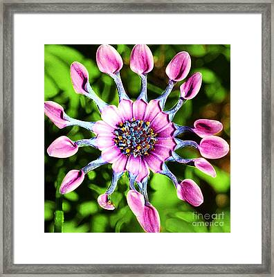 Pink Indian Painted Daisy Framed Print
