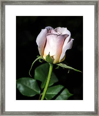 Pink Intentions Framed Print by Camille Lopez