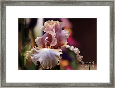 Pink Iris Flower Framed Print by Debra Crank