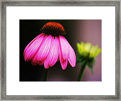 Pink Is A Colour... Framed Print