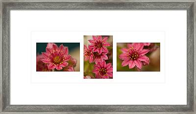 Framed Print featuring the photograph Pink Joy by Trevor Chriss