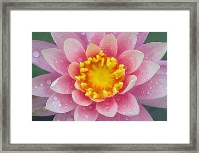 Pink Framed Print by Karen Walzer
