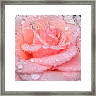 Pink Kisses Framed Print