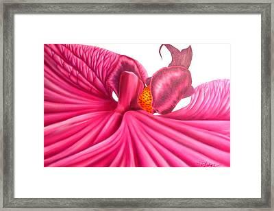 Pink Lady Framed Print by Darren Robinson