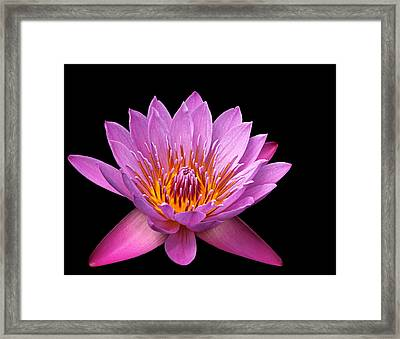 Framed Print featuring the photograph Pink Lady On Black by Judy Vincent