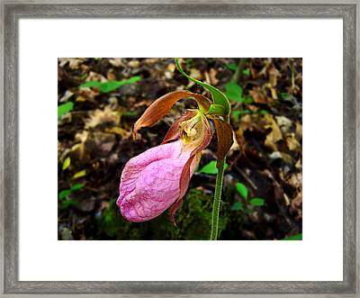 Framed Print featuring the photograph Pink Ladyslipper Orchid by William Tanneberger
