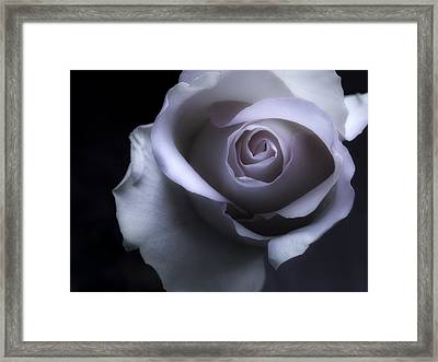 Black And White Rose Flower Macro Photography Framed Print by Artecco Fine Art Photography
