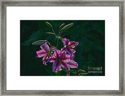 Pink Lilies In The Rain 2 Framed Print by Sharon Talson
