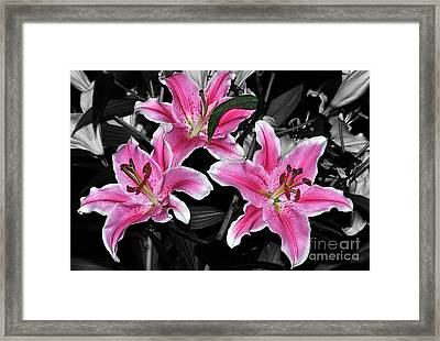 Pink Lilies On Black And White Framed Print by Kaye Menner