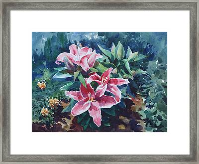 Pink Lilly Framed Print by Helal Uddin