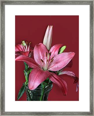 Pink Lily In Rose Framed Print by Linda Phelps