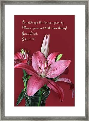 Pink Lily Jogm 1v17 Framed Print