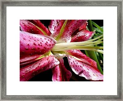 Pink Lily Macro Framed Print
