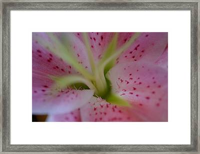 Pink Lily Framed Print by Nancy Edwards