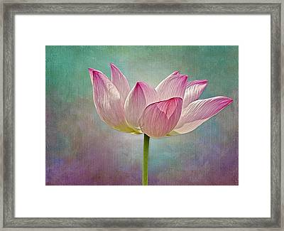 Pink Lotus Blossom Framed Print